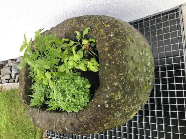 Steintrog für den Kräutergarten